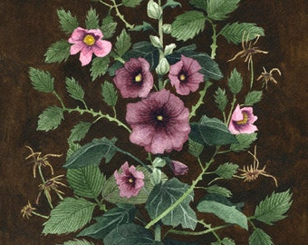 Fine Art Print of Original Watercolor Painting - Hollyhock 'Lady of the Garden'