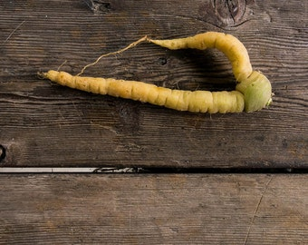 Runner Carrot // photography  gourmet  carrot  root  yum  kitchen