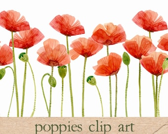 Digital Clipart, Watercolor Poppies, Flower Clipart