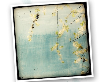 Spring on a blue background - Nature - photo art signed 20 x 20 cm