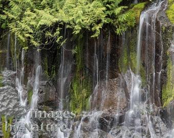 Panther Creek Falls, Washington, Landscape Photographic Print