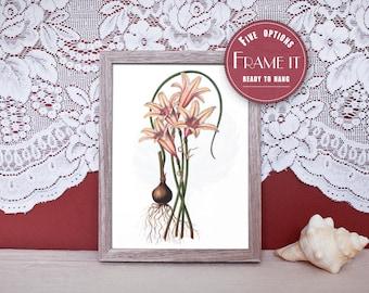 "Vintage illustration of Fire Lily - framed fine art print, flower art, 8""x10"" ; 11""x14"", FREE SHIPPING - 249"