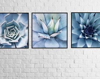 Cactus Photography, Desert Photo, Succulent Set of 3, Black-White-Blue, Digital Print, Wall Art, Printable Poster, Digital Download, 3 JPG's