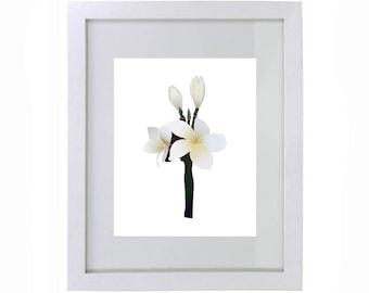 Tropical Plumeria Flower Print