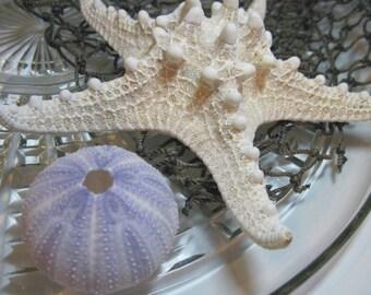Knobby Starfish - Natural Sea Star - Wedding Starfish - Large Knobby -  Beach Wedding Stars - Beach Decor - 6.5 inch
