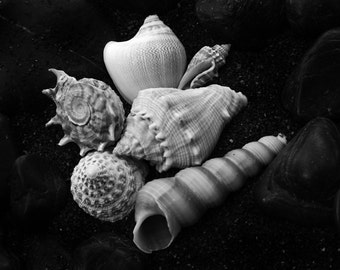 Nature Photography - Seashell No.10 - Fine Art Print - Ocean Decor - Beach Decor - Cottage Chic - Spring - Summer -Black and White