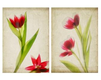 Tulip Botanical Poster Set, Woodland Art, 12 x 16  Red Tulip Art Print, Cottage Chic Decor, Scanner Art,  Flower Photography, Sheer X-Ray