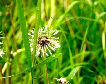 Wish on a Dandelion, Photography, Home Decor