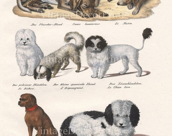 RESERVED for Charlotte. Please do not buy. This print is not for sale Print of Dogs. Original Antique 1827 Lithograph by Carl Brotman.