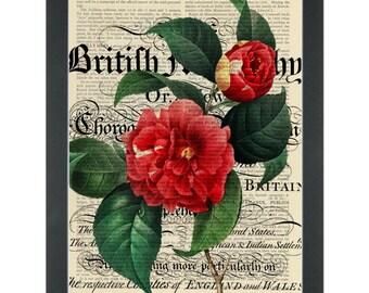 Red rose vintage botanical drawing Dictionary Art Print
