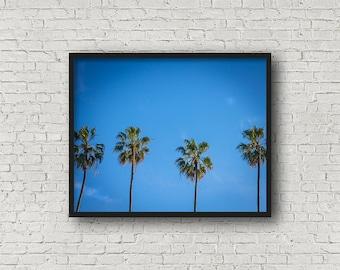 Palm Tree Print / Digital Download / Fine Art Print/ Wall Art / Home Decor / Color Photograph / Nature Print / Nature Photography