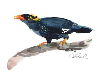 "Minor Bird, Giclee Print, 9x12"""