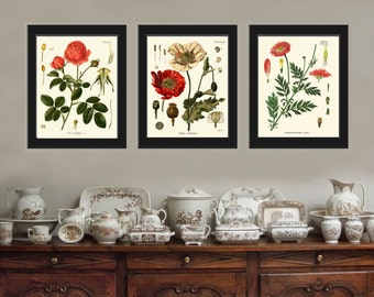 Botanical Print Set of 3 Art  Redoute Antique Beautiful Red Rose Large White Poppy Chrysanthemum Bedroom Dining Living Room Wall Decor