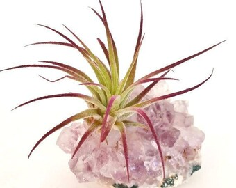 Amethyst Cluster Air Plant Holder , Purple Ionantha , Boho , Gemstone , Desk Accessory , Air Plant Garden  , Crystal Decor.