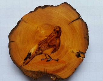4 Huon Pine slices with bird pyrography, used as coasters, paperweights or home decor