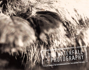 Variation - Feathers, Large Format Polaroid, Abstraction Home Decor Detail 5x7 Fine Art Photograph