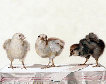 Chicken Greeting Card - Three Little Chicks on a Table - Vintage Style Notecard