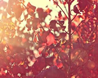 Herbst-Naturfotografie - rote Beeren in der Sunset - 5 x 7 Fine Art print - rote Blätter orange Leuchten Sonnenlicht Tan rustikale Wohnkultur