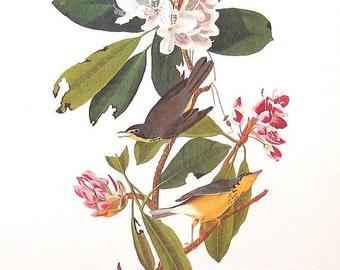 Audubon Bird Print Vintage Art Collectable Book PLATE 90 CANADA WARBLER Yellow White Pink Flowers Summer Nature