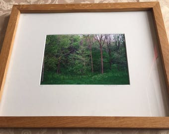 Framed Indiana Forest Print
