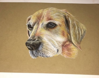 Custom pet portrait, colour pencil hand drawn - dog
