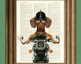 Doxie Danger Motorcycle Stuntman DACHSHUND dog illustration beautifully upcycled dictionary page book art print