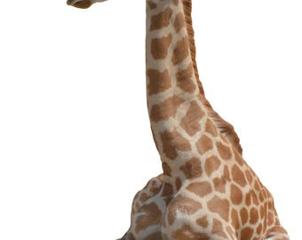 2 baby Giraffe PNG on transparent background