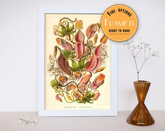 """Vintage illustration of sea life from Ernst Haeckel  - Framed fine art print, home decor, wall art 8""""x10"""" ; 11""""x14"""", FREE SHIPPING - 285"""