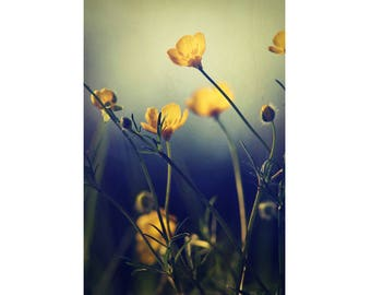 Flower Photography- Fine Art Photograph of Buttercup Flowers Photo Print on Canvas or Paper - Free Shipping