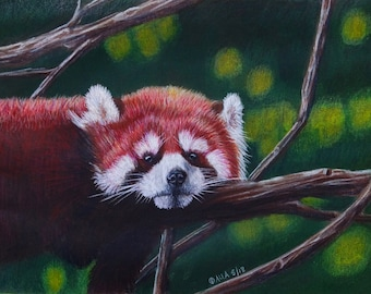 Red Panda original colored pencil drawing