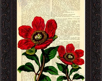 Entire Leaf Red Poeny Print on upcycled Vintage Dictionary  Page