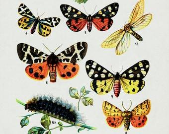Butterflies Print / Canvas Fabric Print / Vintage Art