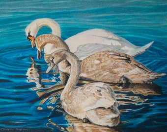 Swans on the Inland Sea an ORIGINAL by Collette Hughes