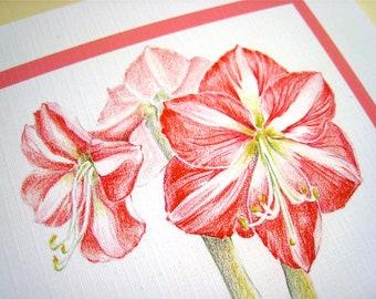 Amaryllis Christmas Card - Christmas Flowers Card - Botanical Art Card