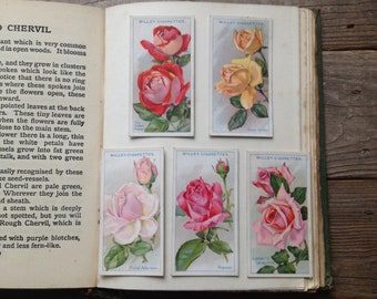 Vintage Botanical Art - Roses set of 5 - Watercolour Art - Wildflowers flower print - Collectable art cigarette cards - botanical Print
