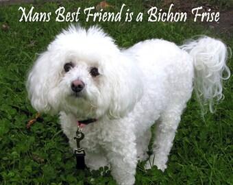 Mans Best Friend is a Bichon Frise Fridge Magnet 7cm by 4.5cm