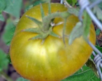 Malachite Box Tomato Heirloom Garden Seed Non-GMO 30+ Seeds Rare Russian Beefsteak Naturally Grown Open Pollinated Gardening