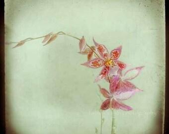 Rose vert menthe orchidée fleur photographie - moderne maison décor floral print -, rose, noir