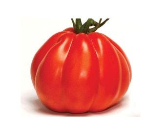 Organic red tomato seeds, non-GMO seeds, ecofriendly heirloom tomato seeds, 30 seeds, Albenga heart tomato seeds, home grown tomatoes