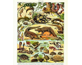 1933 Antique Reptile Chart Print. Larousse Book Plate. Large Size. Herpetology Wall Art Home Decor