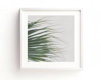 minimalist decor, palm tree print, abstract photo, green wall art, nature photography, digital file, loft, office decor, botanical art print
