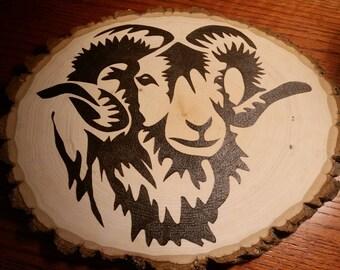 Bighorn Sheep Ram Live Edge