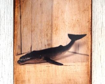 Toy Whale  Art/Photo - Wall Art 4x6