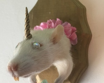 "Weird Taxidermy-""Unicorn Rat"""