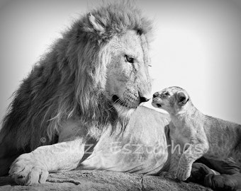 50% OFF SALE, Baby Lion and Dad, African Safari, Baby Animals, Black and White Photo, Wildlife Photography, Nursery Wall Art, Kids Room