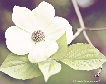 Flower Photography - Nature Photograph -  Dogwood Tree Photograph - Flower - Dogwood - Fine Art Photography Print - White Green Home Decor