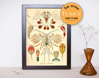 """Vintage illustration from Ernst Haeckel  - framed fine art print, sea creatures,sea life, 8""""x10"""" ; 11""""x14"""", FREE SHIPPING - 307"""