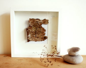Birch bark illustrations