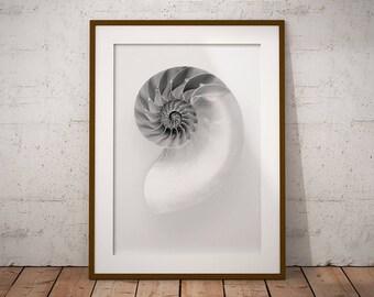 Nautilus Shell Art Print, Spiral Seashell Wall Art, Black and White Nautical Decor, Classic Masculine Nautilus Sea Shell Digital Print