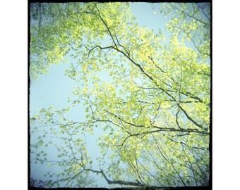 Sky Photo, Abstract Photography, Tree Photo, Spring Landscape Photograph, Chartreuse Turquoise Decor, Holga Photo